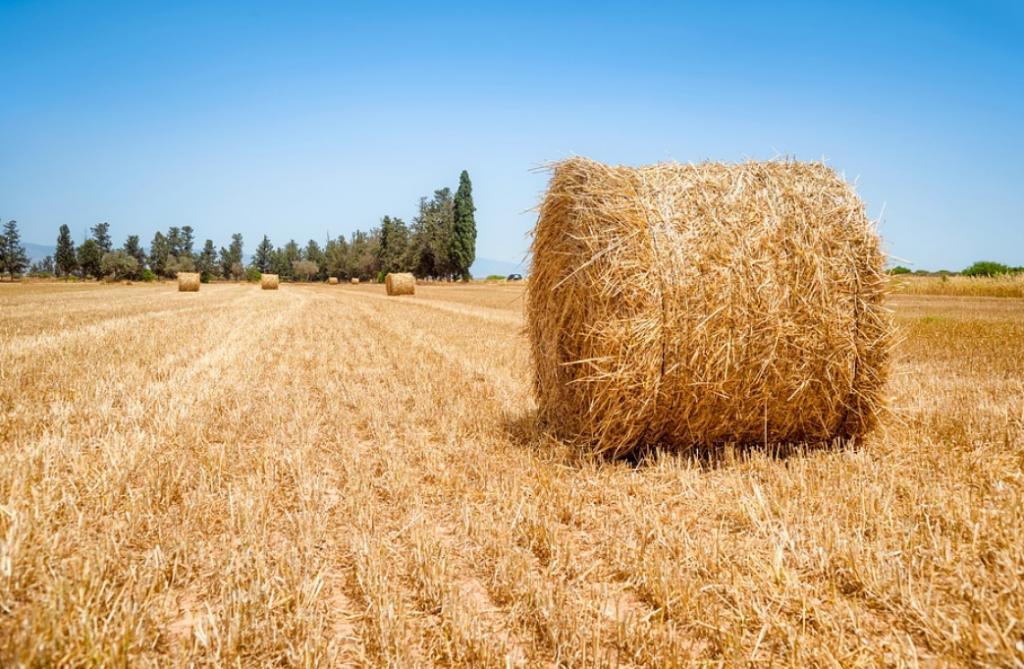 campos trigo paja