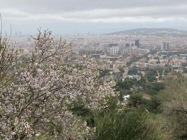 barcelona contaminante
